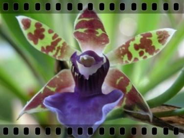 dia_internacional_biodiversidade_01