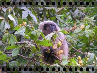dia_internacional_biodiversidade_011