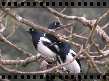 dia_internacional_biodiversidade_017