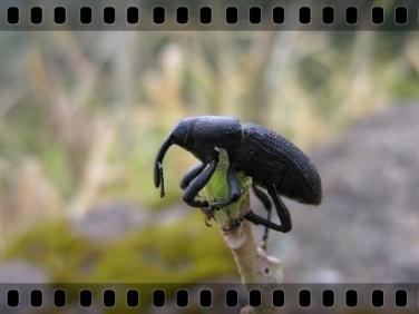 dia_internacional_biodiversidade_04
