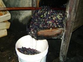 vinho caraca3