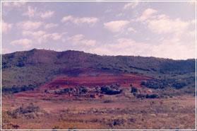 Foto da mata do Capão da Coruja em 1985